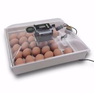 Как выбрать бытовой инкубатор для яиц